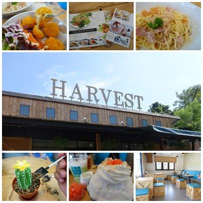 รีวิวร้าน HARVEST cafe เชียงใหม่
